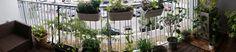 Gärtnern in der Stadt :-) Viele tolle Berichte wie es der Balkongärtnerin ergeht. #Balkongarten