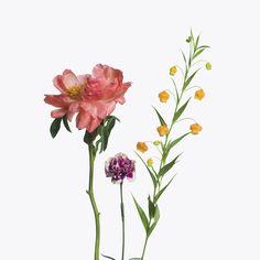 1 Pink Peony, 1 Two Tone Carnation, 1 Sandersonia #inezandvinoodh