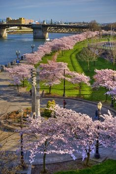 Tom McCall Waterfront Park, Portland, Oregon, USA