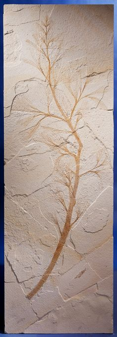 RARE FOSSIL PALM STAMEN Sabalites sp. Eocene Green River Formation, Lincoln Co., Wyoming, USA