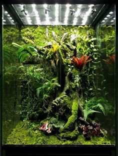 The amount of moss cover creates the illusion of being ancient, which reminds me of the spirit lake scenes from Princess Mononoke. Planted Aquarium, Aquarium Aquascape, Aquascaping, Terrariums Gecko, Terrarium Reptile, Aquarium Terrarium, Terrarium Plants, Orchid Terrarium, Gecko Vivarium