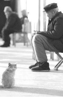 羅東自然教育中心: 森活館-被遺忘的時光 Cats, Animals, Gatos, Kitty Cats, Animaux, Animal, Cat, Animales, Kitty