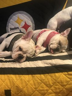 Sleepyheads, Bodie and Letty Lou, the French Bulldogs