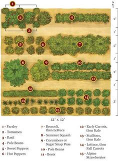 How to start a garden with simple instructions to prep soil and summary of easy to grow veggies
