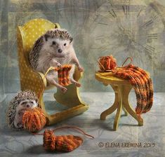 Tiny Hedgehogs Play Dress Up and Pose for Silly Photos