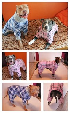 Pitbull Pajamas by Tooth & Honey