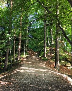 Felsenegg-Uetliberg: My First Hike in Switzerland — living minnaly Lucerne Switzerland, Eurotrip, Lush Green, The Conjuring, Farm Animals, Beautiful World, Places Ive Been, Travel Destinations, Hiking