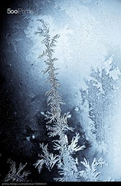 Icy flowers by Alexandru Barbu Imagination Station, Holiday Festival, Winter White, Amazing Nature, Contemporary Design, Scenery, Seasons, Flowers, Inspiration
