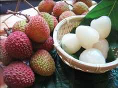 Asian Tree Fruit Red - Yahoo Image Search Results