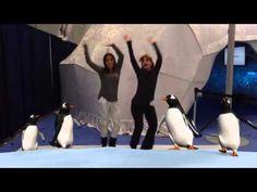 SeaWorld's Antarctica Do The Penguin Dance - Maricruz