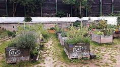 Zasaď si zeleninu. Zasaď se o dobré sousedské vztahy. Tolik krédo komunitní zahrady Na Smetance na pražských Vinohradech, kde již třetím rokem pěstuje skupina nadšenců nejen zeleninu či bylinky. Společně vybudovali i dětské hřiště z přírodních materiálů, pořádají workshopy a prostě se tu potkávají.