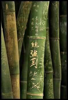 "The Bamboo that bends is stronger than the Oak that resists. – Japanese Proverb As ancient Chinese poets have written describing an honorable man, they compared him to bamboo. They reveal that he does not have to be physically strong, but must be mentally strong, upright and perserverant. As the fastest growing plant in... <a href=""http://www.chicagonow.com/zen-living-by-design/2013/04/the-bamboo-that-bends/"" class=""more-link"">Read more »</a>"