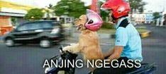 chat on chat, nct ft skz Funny Dog Jokes, All Jokes, All Meme, Memes Funny Faces, Cartoon Jokes, Cute Memes, Me Too Meme, Funny Relatable Memes, Dankest Memes