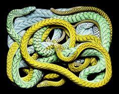 Serpents by Guido Mocafico | conundrum