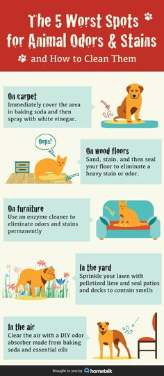 The 5 Worst Spots for Pet Stains (and How to Clean Them!) | Hometalk