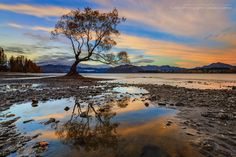 Standing alone on this beautiful lake in Wanaka. Arguably one of the most photographed willow tree here in New Zealand. Location: Lake Wanaka, New Zealand. Sunset Landscape, Landscape Photos, Landscape Photography, Nature Photography, Photography Tips, Exposure Photography, Pictures To Paint, Cool Pictures, Cool Photos