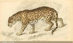 jardine-william-1800-1874-unit-the-naturalist-s-library-27-2892166.jpg 500×298 pixels