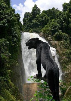 black panther and a waterfalL