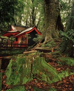 Forest shrine, Kumano trail, Japan...would love for backyard bathhouse/guest house to look like this.
