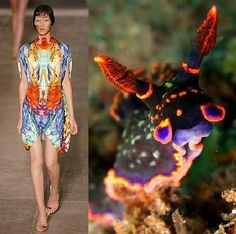 Photo of Environment-Inspired Couture