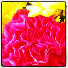 Pretty pink and yellow