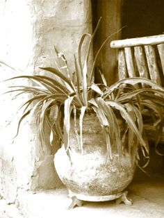 Vintage Rustic Pottery Yucca Plant Photography by CrazyFabBoutique