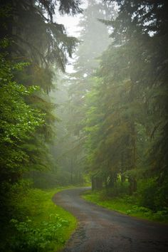Siuslaw National Forest - a road less traveled.
