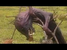 UFO News: Body of Chupacabra Found In Mexico. Please Share!!! - YouTube