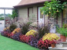 Beautiful Fall Flowers To Plant In Your Garden 0290
