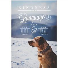 Kindness is a language that the blind can see and the deaf can hear ♡