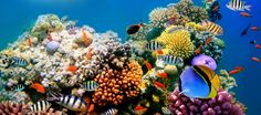 traveler-guides-travel-20-most-beautiful-reefs-in-the-world-1.jpg (1263×560)