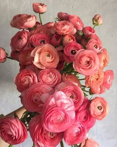 Ranunculus 'Salmon Elegance' - Buds and Blossoms - Flowers Roses Pink, Tea Roses, Pink Peonies, Yellow Roses, Fresh Flowers, Spring Flowers, Beautiful Flowers, Exotic Flowers, Purple Flowers