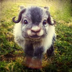 Exhibit A. Previous pinner: Cute little Baby Muskox. Me: Nnnno. It's needle felted, and not even a good likeness. The horns are ridiculous because A) a calf doesn't have horns, and B) even an adult's horns don't look like THAT!