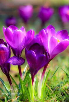 purple flower of spring by Shahow Wali, via 500px