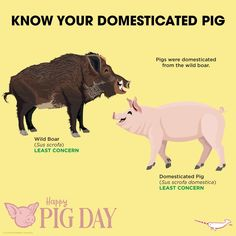 Know your pigs animal animal facts, fun facts about animals, animals information Animals Of The World, Animals And Pets, Cute Animals, Fun Facts About Animals, Animal Facts, Types Of Crocodiles, Retarded Animals, Animals Information, Happy Pig