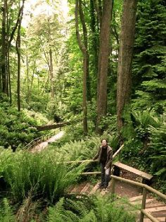 The rainforest trail down to Wreck Beach in Vancouver, British Columbia, Canada.