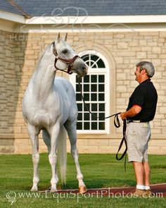 Alphabet Soup is a direct result of classic Tartan Farm breeding through both his sire and his dam