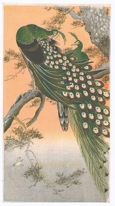 Ohara Koson:  Peafowls   Ca. 1910