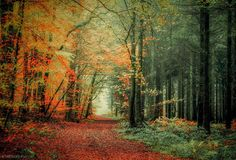 Leavy or coniferous ? by Patrice Thomas on 500px