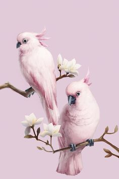 Pink Birds Perching on Magnolia Wall Mural #wallmural #walldecor #wallart #birds #pink #magnolia #homedecor #photowallsweden
