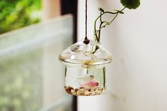 Unique mushroomhouse style aquarium terrarium//hanging underwater living//mini glass fish bowl// home decoration//office desk decor by NewDreamWorld on Etsy https://www.etsy.com/listing/253657840/unique-mushroomhouse-style-aquarium