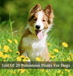 List of 20 Poisonous Plants For Dogs