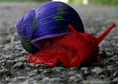 """This #snail certainly is popular! He is a great model for one of our characters in """"Misho of the Mountain"""" http://dldiehl.com #creatures #bookcharacters #mollusk #childrensbooks #kidlit"""