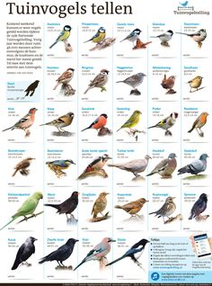 Animals Of The World, Animals And Pets, Cute Animals, Bird Illustration, Illustrations, Bird Identification, Kinds Of Birds, Bird Food, Flora