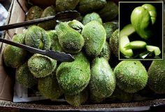 chayote..native to Central America