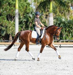 Lisa Wilcox: How to discover greater degrees of throughness with your dressage horse.