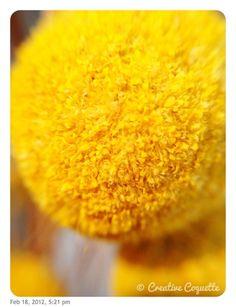 Yellow: 49/366