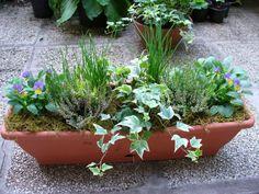 Peonies, Bali, Planter Pots, Plants, Outdoor, Window, Gardening, Outdoors, Windows