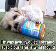This is what happens when your dog is too quiet for too long. #pet #funnies #humor