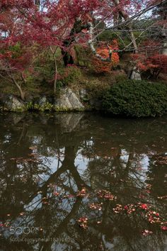 Autumn at Kiyomizu Dera by allenfotowild  autumn trees reflections pond fall season floating leaves red maple leaves Kyoto Japan Kiyomizu Dera